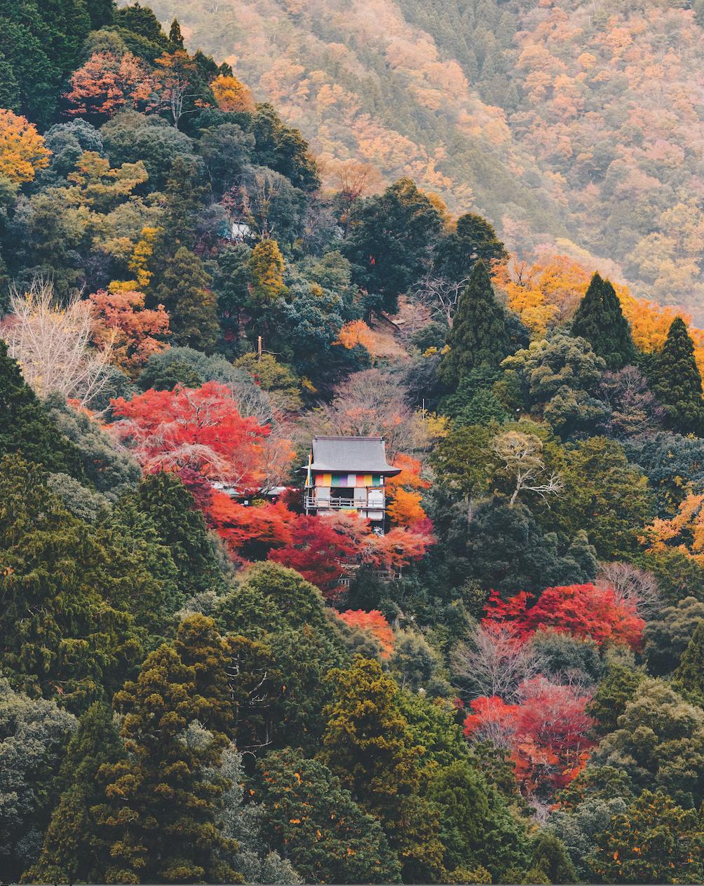 5 sposobów na życie po japońsku