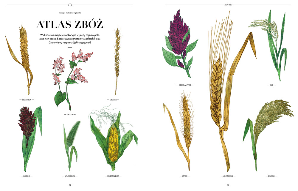 Spelt, wheat, barley